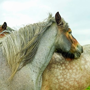 Paarden op het eiland Tiengemeenten
