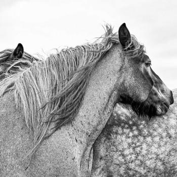 Paarden  zwart-wit